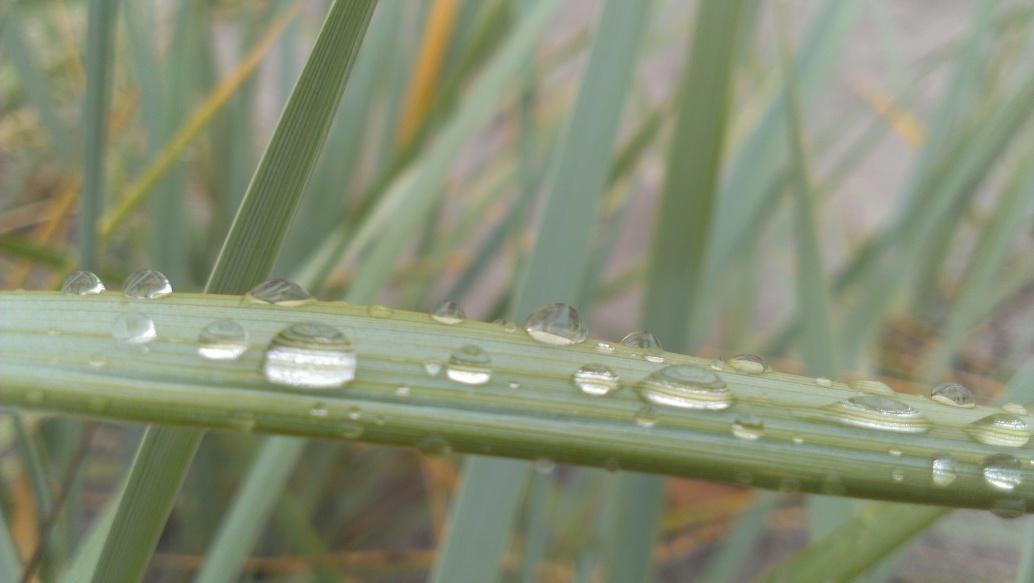 Hydrophobieren Hydrophober Effekt